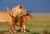 LNS 01 DB0001 01