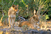 LNS 01 DB0012 01