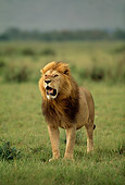 LNS 01 DB0019 01