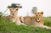 LNS 01 NE0007 01