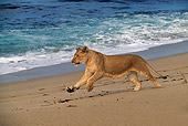 LNS 01 RK0038 01