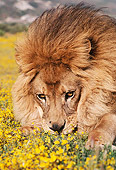 LNS 01 RK0056 16