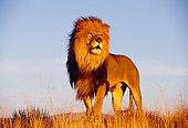 LNS 01 RK0108 07