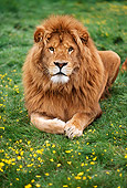 LNS 01 RK0145 04