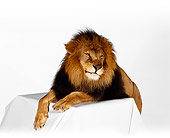 LNS 01 RK0231 15