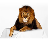 LNS 01 RK0231 17