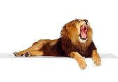 LNS 01 RK0243 01