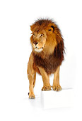 LNS 01 RK0248 15