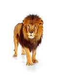LNS 01 RK0258 10