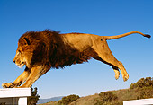 LNS 01 RK0271 19