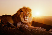 LNS 01 RK0295 02