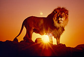 LNS 01 RK0427 01