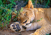 LNS 02 DB0005 01