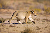 LNS 02 HP0001 01