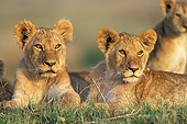 LNS 02 JE0001 01