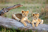 LNS 02 MC0002 01