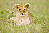LNS 02 MC0006 01