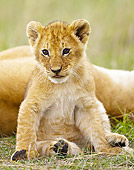 LNS 02 MC0007 01