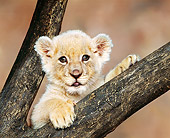 LNS 02 RK0002 10