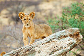LNS 02 RW0005 01
