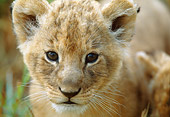 LNS 02 DB0009 01
