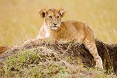 LNS 02 NE0001 01