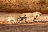 LNS 02 NE0007 01