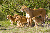 LNS 02 NE0008 01