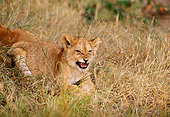 LNS 02 TL0004 01