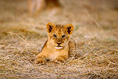 LNS 02 TL0005 01