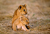 LNS 02 TL0006 01