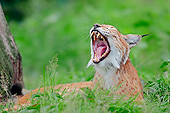 LYX 01 AC0006 01