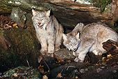 LYX 01 RK0045 10