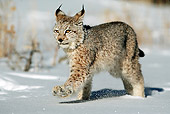 LYX 01 WF0001 01