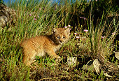 LYX 01 DB0001 01