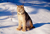 LYX 01 LS0001 01