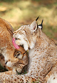 LYX 01 LS0002 01