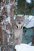 LYX 01 RF0022 01