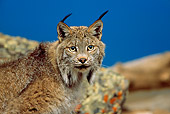 LYX 01 RW0002 01