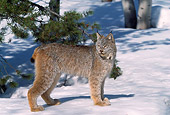 LYX 01 RW0003 01