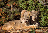 LYX 01 TL0005 01