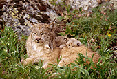 LYX 01 TL0007 01