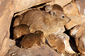 MAM 02 MH0002 01