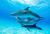 MAM 03 JM0099 01