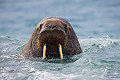 MAM 03 KH0047 01