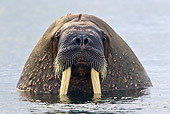 MAM 03 KH0052 01