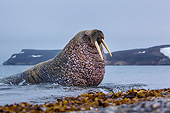 MAM 03 KH0057 01