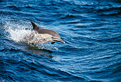 MAM 03 MC0001 01