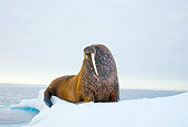 MAM 03 SK0004 01