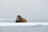 MAM 03 SK0010 01